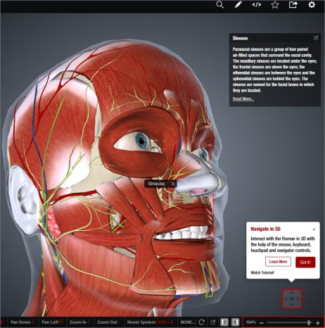 Atlas gratuito de Anatomía Humana en 3D de Biodigital Human | AEPSAL